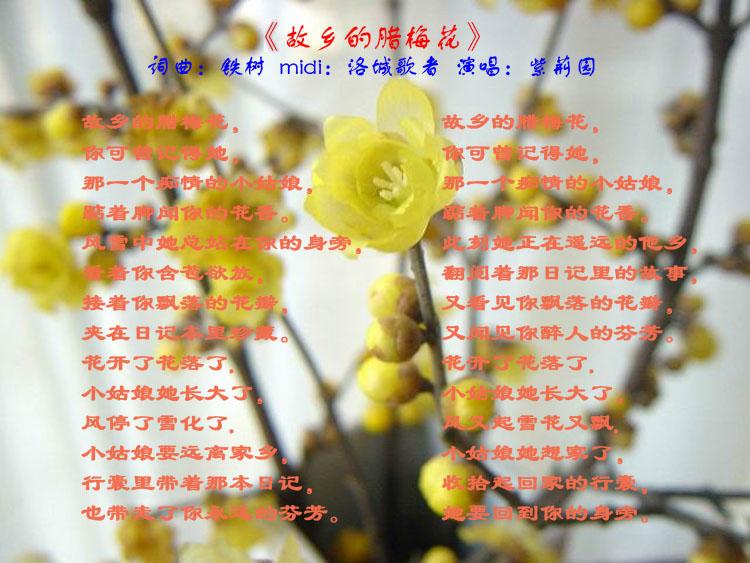 原创歌曲:《故乡的腊梅花》图片
